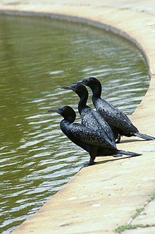 WTJ Parker D Birds at North Joondalup 4.jpg
