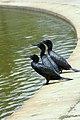 WTJ Parker D Birds at North Joondalup 4.jpg