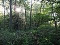 Wald im Dahlemer See, Nr. 1.jpg