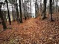 Waldpfad bei Altertheim.jpg