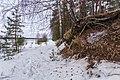 Western Border Of Vozdvizensky Forrest.jpg