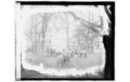 White House sheep 1920.png
