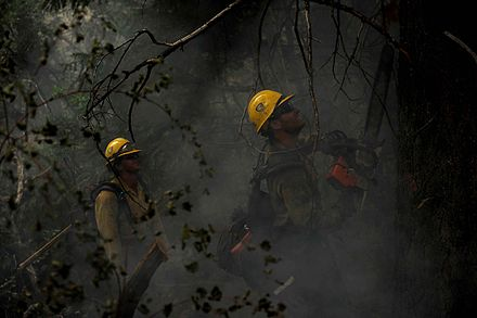Wildfire fighters cutting down a tree using a chainsaw Wildfire fighter.jpg