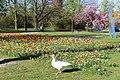 Wilhelminapark, Breda P1360764.jpg