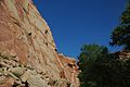 Wingate Sandstone (Upper Triassic), Fremont Petroglyphs Cliff, Capitol Reef National Park, southern Utah 1 (8445592072).jpg