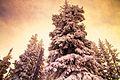 Winter's Warmth (6978141163).jpg