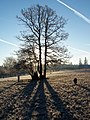 Winter Morning with a Border Collie - panoramio.jpg