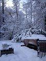 Winter at my backyard concord canada.jpg