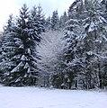 Winterlicher Wald - panoramio.jpg