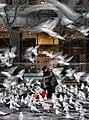 Within the gulls - Flickr - striatic.jpg