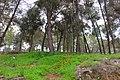 Wood - panoramio (3).jpg