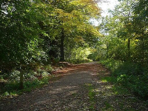 Woodland track through Ashton Hill Plantation - geograph.org.uk - 2155113