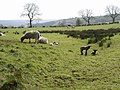 Wycoller - geograph.org.uk - 655740.jpg
