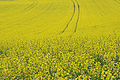 Yellow (7548478526).jpg