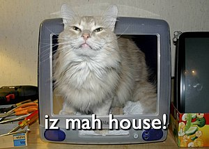 Yet another lolcat