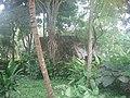 YucatanHoneymoon 167 (373764782).jpg