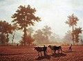 Zünd Bauern mit Ochsengespann beim Eggen.jpg