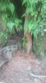 Zanja Soro e Ita Pyta Punta Cavernas 2.png