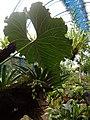 (Jardín Botánico de Quito). pic a7.JPG