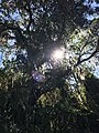Árbol en el camino en Incallajta.jpg