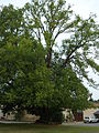 Église la forêt de tessé 7 août 2009 (4).jpg
