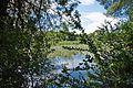 Δάσος Καλόγριας 14.jpg