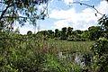 Δάσος Καλόγριας 16.jpg