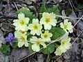 Весна в Каралезьській долині.jpg