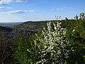 Весна на склонах Кременецких гор.jpg