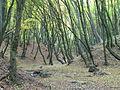 Винниківський лісопарк (2).JPG