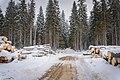 Вырубка заказника долины реки Смородинки. Сзади не тронутый лес, ближе к Орехово.jpg