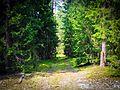 В лесу - panoramio (28).jpg