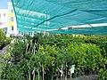Красивые растения - panoramio.jpg