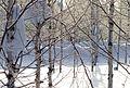 Муравленко февраль 2014 - panoramio (21).jpg