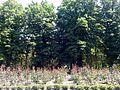 М. Херсон, Бериславське шосе, с. Наддніпрянське Дендрологічний парк Інституту зрошуваного землеробства НААН.jpg