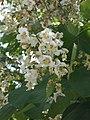 Растения в Седово 244.JPG