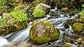 Росочка Река 2.jpg