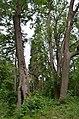 Садиба де-Шодуара, парк 02.jpg
