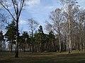 Сосновая роща в Черкизовском парке.jpg