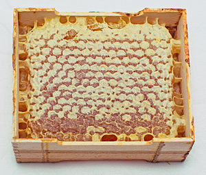 Honey in honeycombs