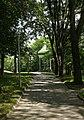 Стежка до альтанки на Болдиних горах.jpg