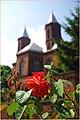 Чернівецька троянда.jpg