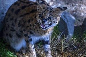 حیوانات باغ وحش مرکزی شهر تفلیس پایتخت گرجستان 46.jpg