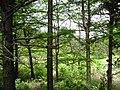 东白山原始森林 - panoramio.jpg