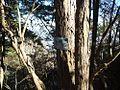 倉門山 2013-11-17 - Mt. Kurakado - panoramio.jpg