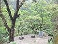 南山古道途中的古树石桥 - panoramio.jpg