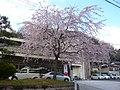 吉野町役場 Yoshino-chō town office 2010.3.29 - panoramio.jpg
