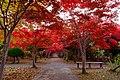 平岡樹芸センター(Hiraoka arboriculture center) - panoramio (23).jpg