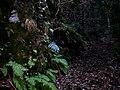 広島市安佐南区丹原 - panoramio.jpg