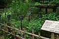 東高根森林公園 - panoramio (49).jpg